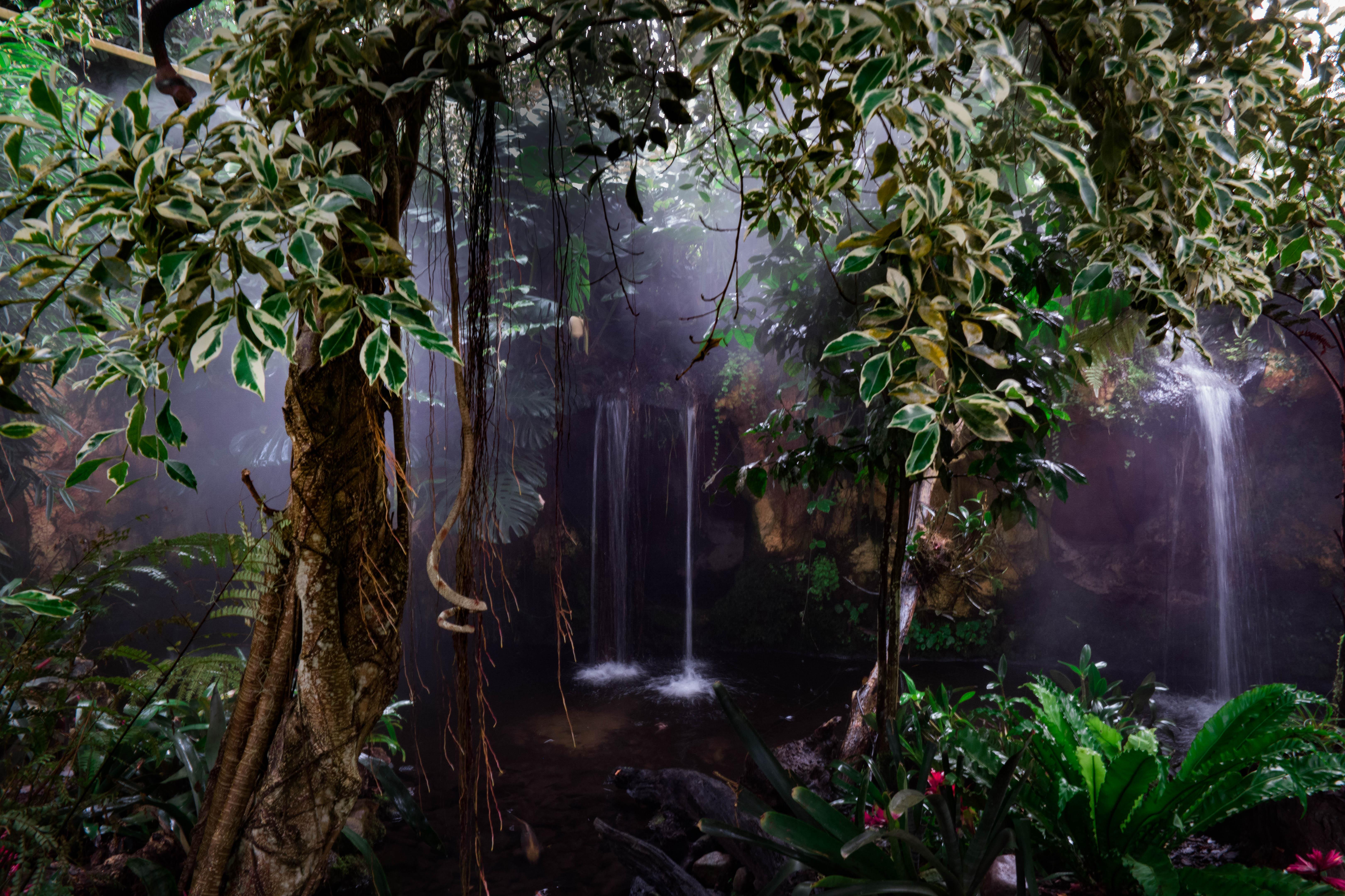 WM-Fotografen, tropisch regenwoud Orchideeënhoeve Luttelgeest